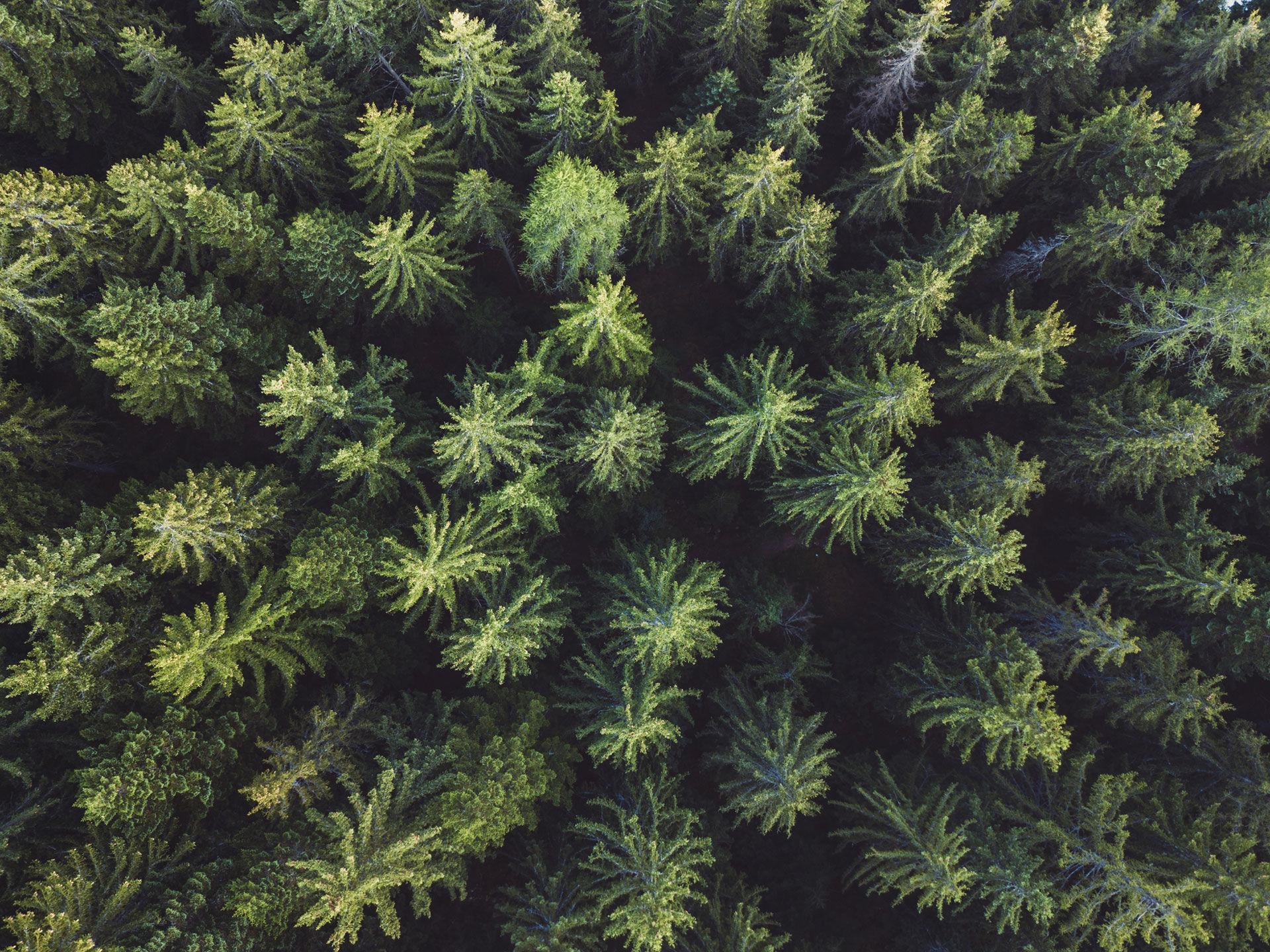 Tannenwald Holz von oben