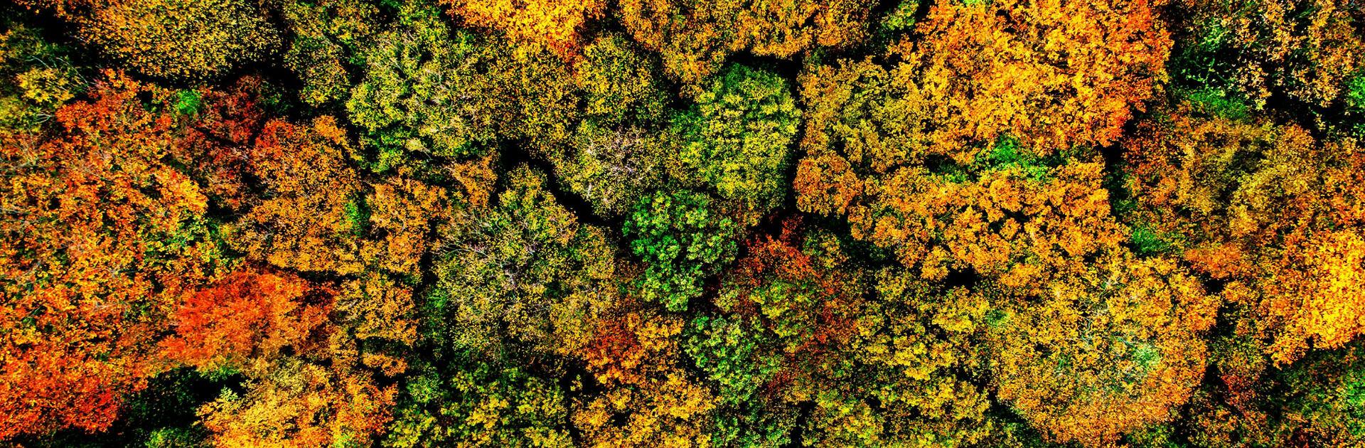 Herbstlandschaft Holz von oben
