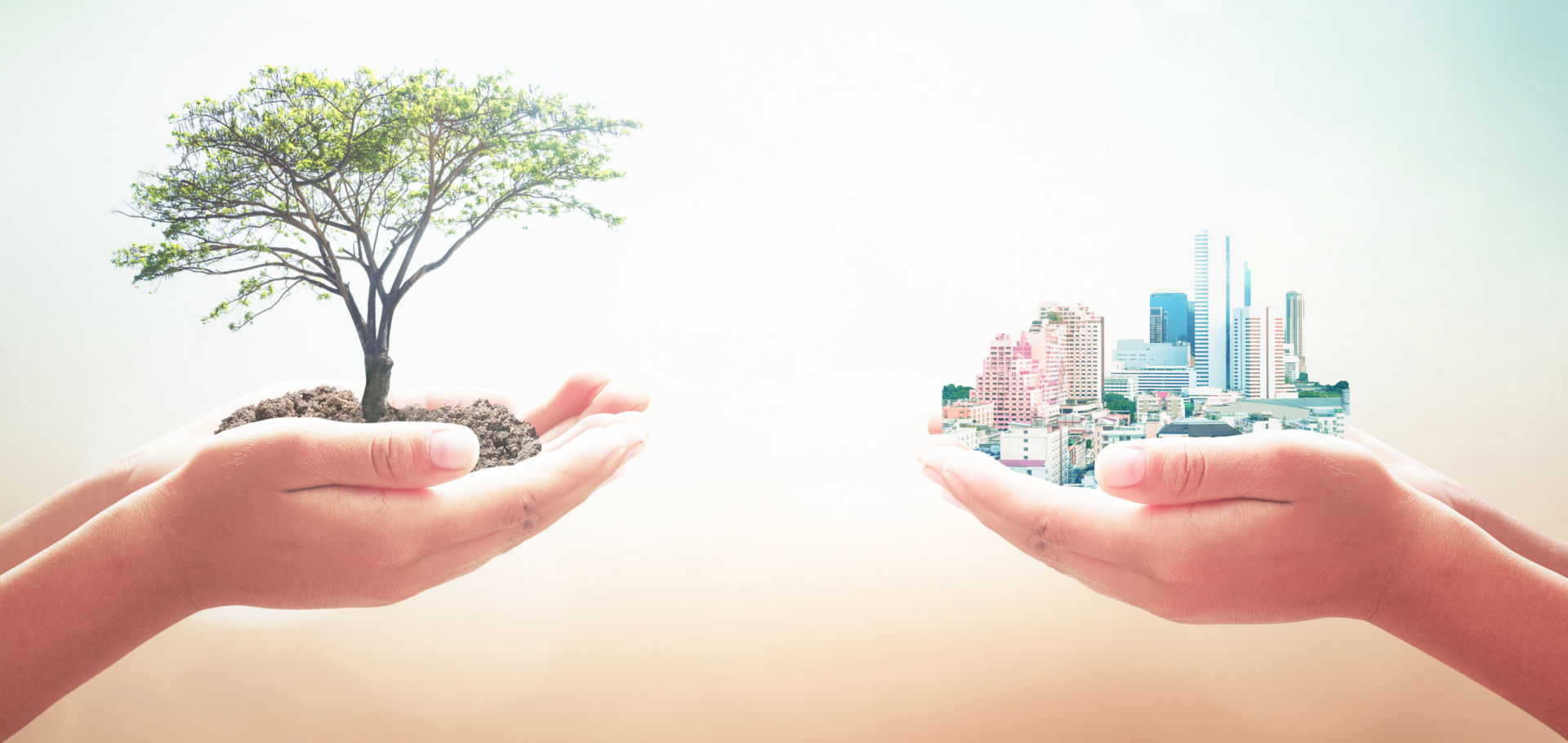 Zwei menschliche Hände, die großen Baum und Stadt über unscharfem Naturhintergrund halten